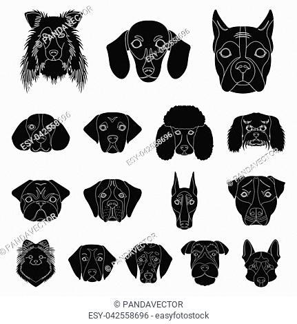 Dog breeds black icons in set collection for design.Muzzle of a dog bitmap, symbol stock illustration