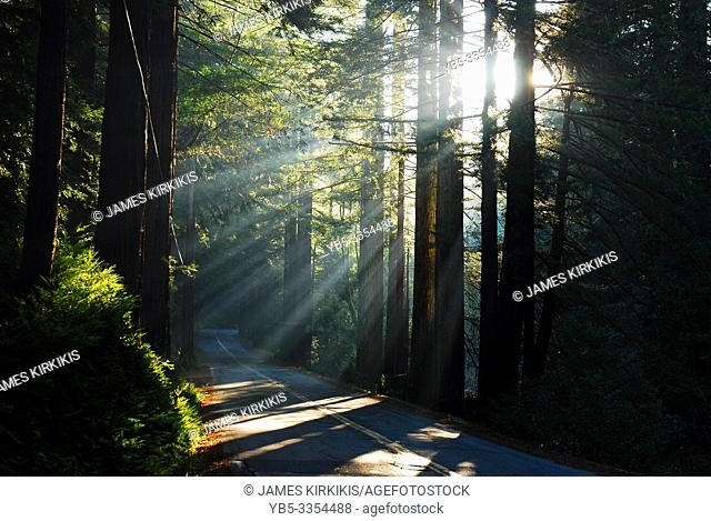 Sun beams bursts from the redwoods along a tree lined country road