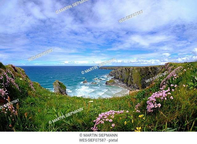 Great Britain, England, Cornwall, near Newquay, Bedruthan Steps, rocky coast, marsh daisies