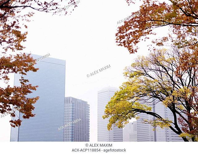 Osaka modern architecture office buildings view through the foliage of colorful autumn trees and morning mist. Downtown Chuo-ku financial distric high-rise...