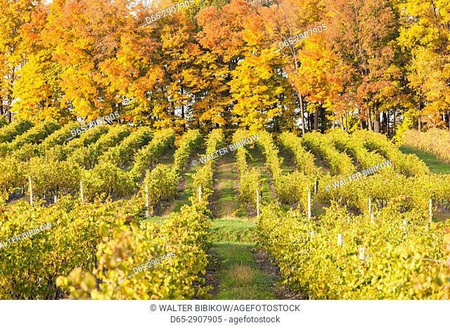 USA, New York, Finger Lakes Region, Dundee, vineyard, autumn