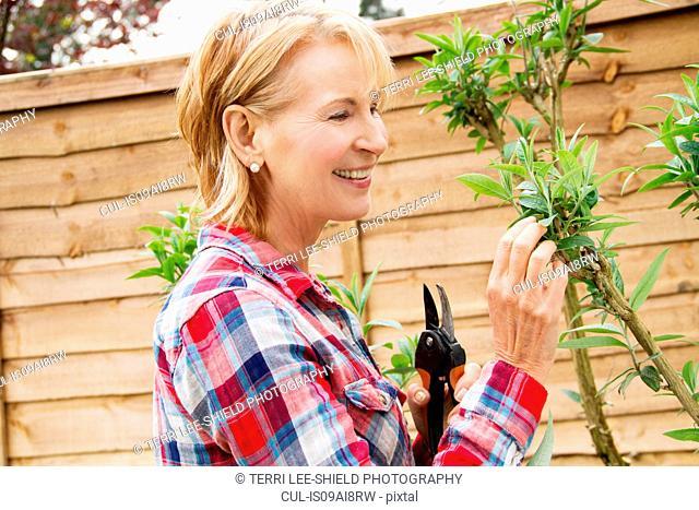 Mature woman pruning tree in garden