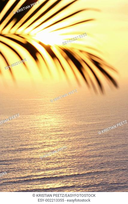 Beautiful shot of a palm tree infront of the sun in south-america  The palm is blurred and the colours are very hot and soft  Sun is reflecting on the ocean...