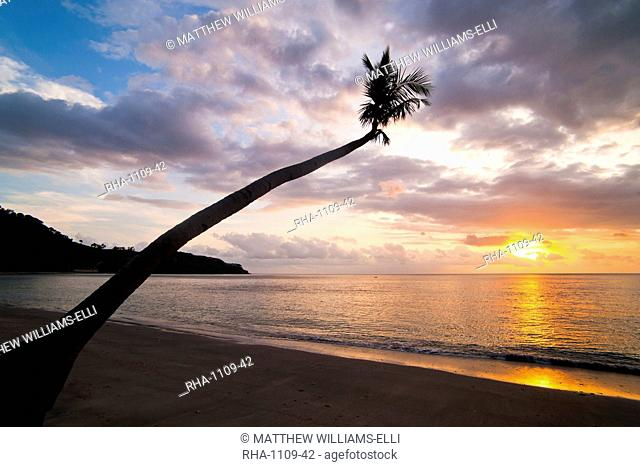 Overhanging palm tree at Nippah Beach at sunset,l Lombok Island, Indonesia, Southeast Asia, Asia