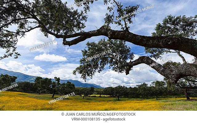 Ambroz Valley. Cáceres. Extremadura. Spain