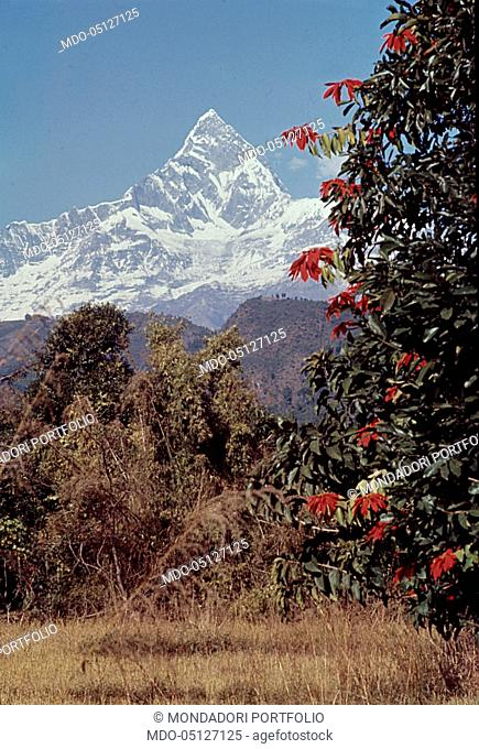 The Nepalese Himalayan mountain of Machapuchare - 6997 meters high - well known because of its being alike the Matterhorn. Nepal, 1965