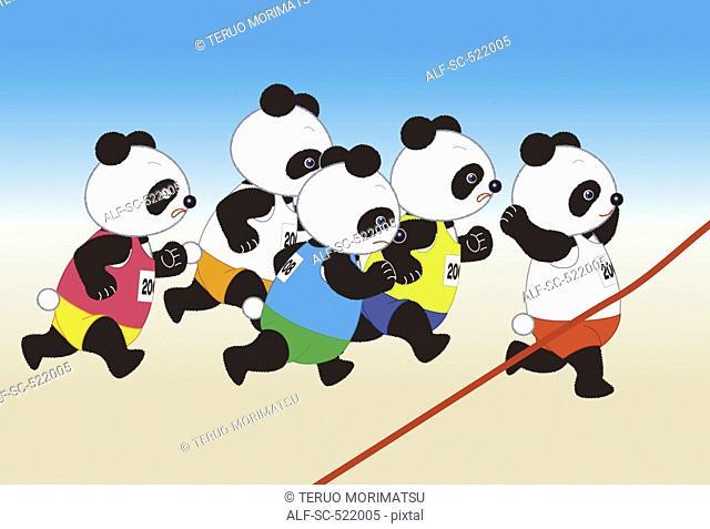 Panda Marathon Runners