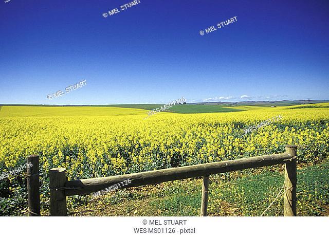 fields near Heidelberg, Western Cape, Overberg, South Africa