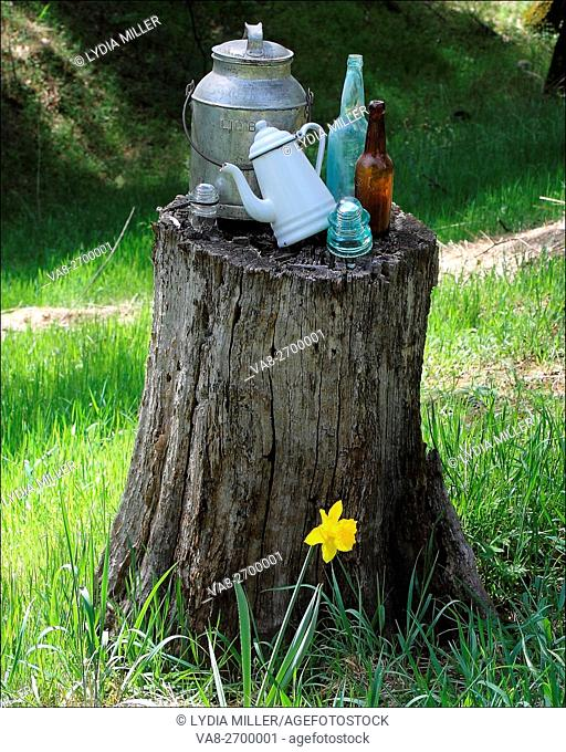 Old bottles, and more mix with an old wood stump in Pleasant Valley, California, USA