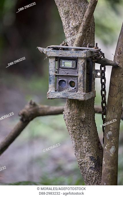 India, State of Assam, Kaziranga National Park, veillance camera attached to a tree, camera trap