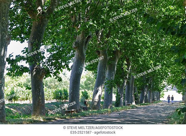 Two women walk down a platane tree shades allee