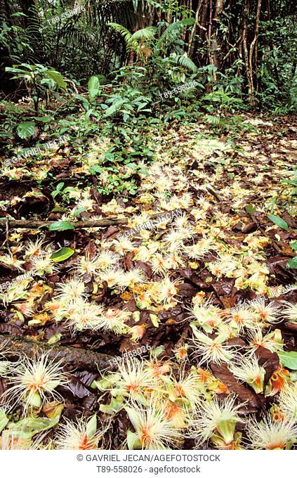 Asia, Indonesia, Sumatra island, Rain forest landscape