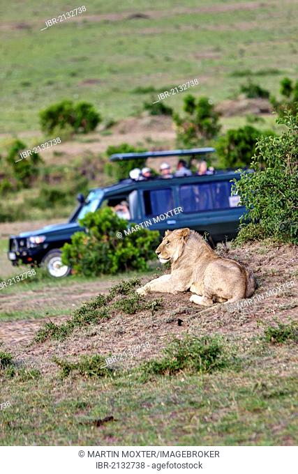 Lion (Panthera leo) resting, being observed by tourists in a safari jeep, Masai Mara National Reserve, Kenya, East Africa, Africa, PublicGround