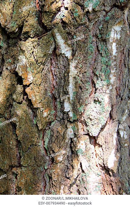 Tree bark texture macro close up