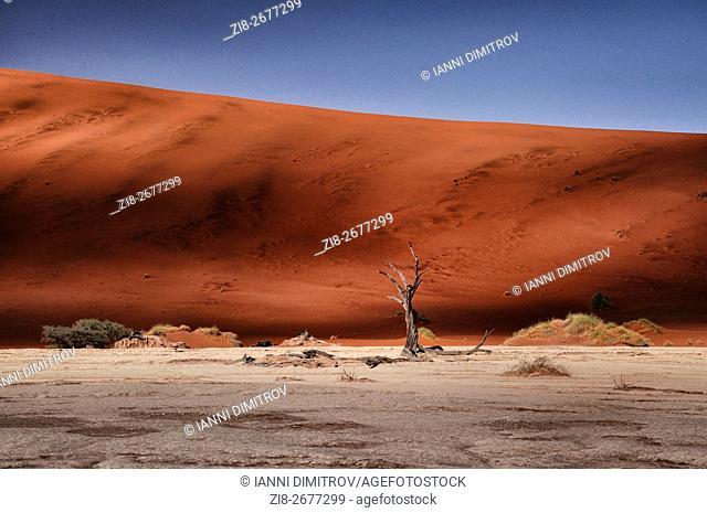 Dead camelthorn tree in Dead Vlei,Namib desert,Namib Naukluft Park,Namibia,Africa