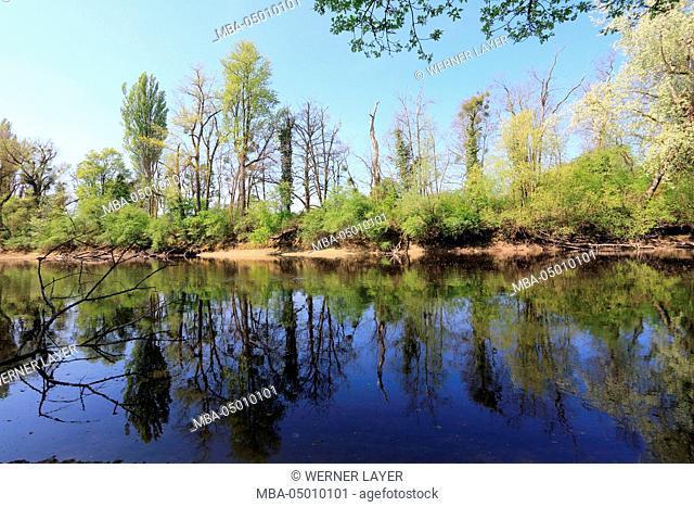Wetlands scenery in spring