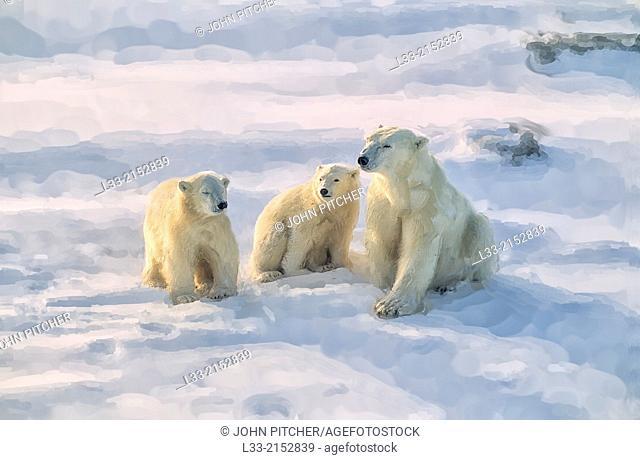 Polat bear with her cubs