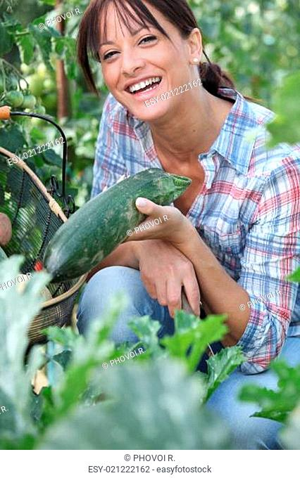 Woman picking a cucumber on her vegetable patch