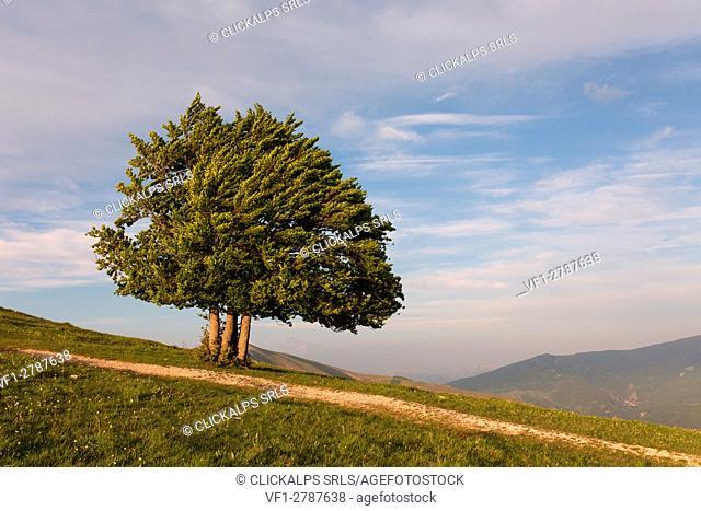 Europe,Italy, Umbria, Perugia district, Sibillini mountains, Castelluccio of Norcia village