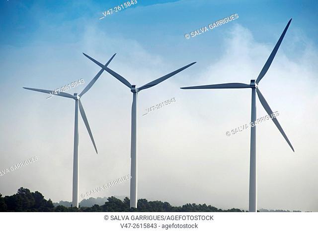 Three windmills windfarm Almansa, Albacete, Castilla La Mancha, Spain, Europe