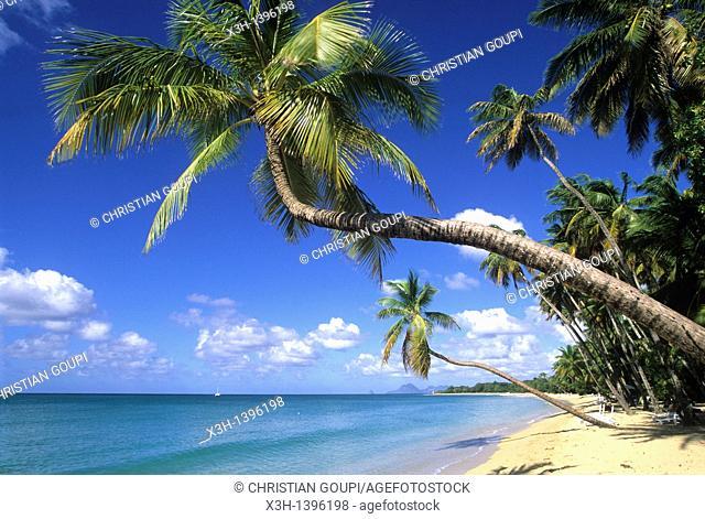 plage de la Grande Anse des Salines, Sainte-Anne Ile de la Martinique Departement et Region d'Outremer francais Archipel des Antilles Caraibes//beach of Grande...