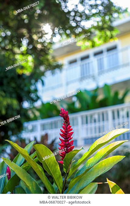 U.S. Virgin Islands, St. Thomas, St. Peter, Heliconia