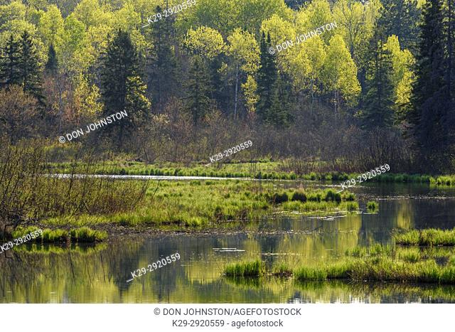 Spring reflections in Fairbank Creek, Greater Sudbury, Ontario, Canada
