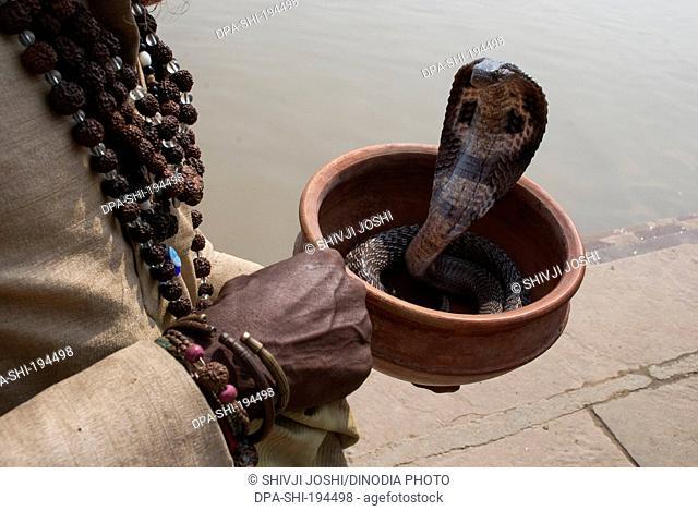 Snake charmer ganga river, varanasi, uttar pradesh, india, asia