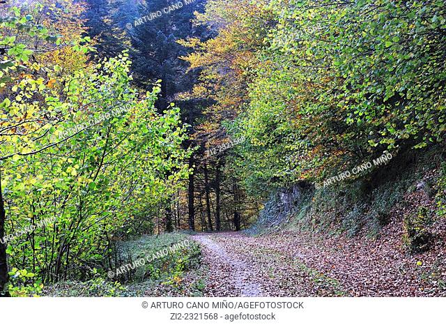 The Irati Forest, Navarre, Spain