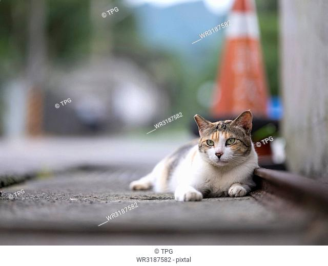 Portrait of cat laied beside the road