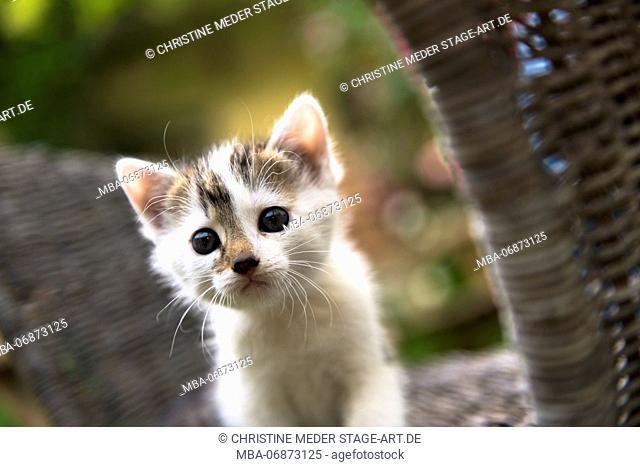young cat, animal, farm