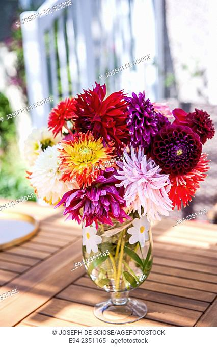 An arrangement of cut Dahlia flowers in a vase on a table outdoors in the summer