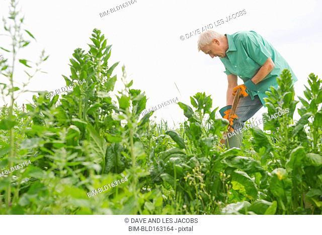 Caucasian farmer working in farm fields