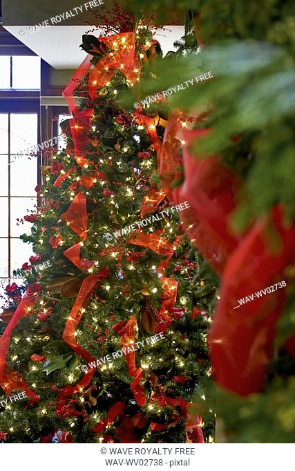 Decorated Christmas tree with red ribbon and lights, Canada, Ontario