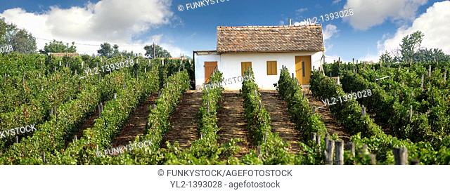 Villany vineyards  Villany  Hungary