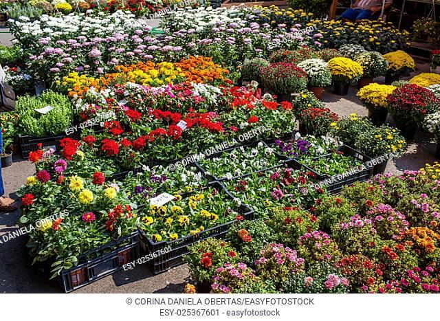 Flowers market at Bucharest Romania