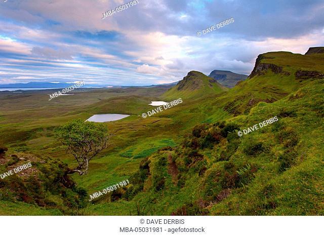 Sundown, tree, view, Ilse of Skye, Quiraing, highlands, Scotland