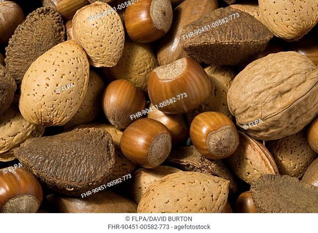 Almond Prunus dulcis, Hazel Corylus avellana, Walnut Juglans regia and Brazil Nut Bertholletia excelsa, pile of mixed nuts