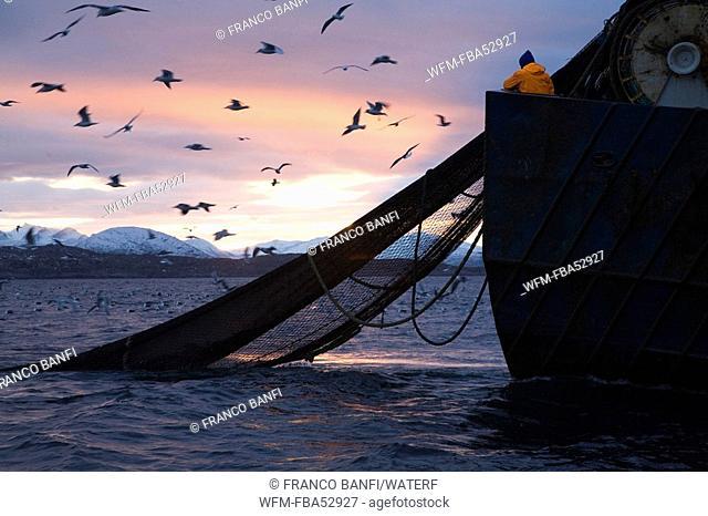 Fishing Boat pulling out Fishing Nets, Solvaer, Vestfjord, Lofoten, Norway