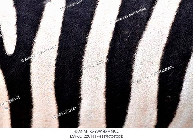 Patterning of skin of Zebra