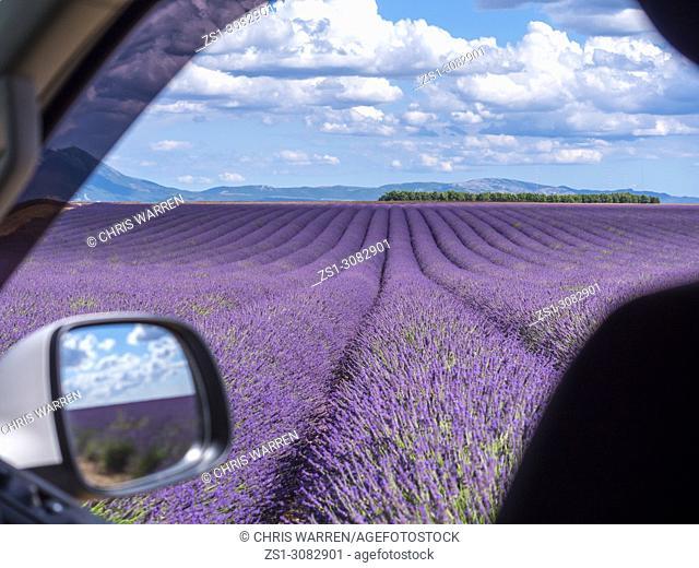 Lavender fields Puimoisson Valensole Plateau Forcalquier Alpes-de-Haute-Provence Provence-Alpes-Cote d'Azur France