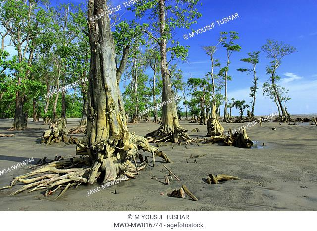 A UNESCO World Heritage site, the Sundarban is the largest mangrove forest in the world that lies on a delta at the mouth of the Ganges River