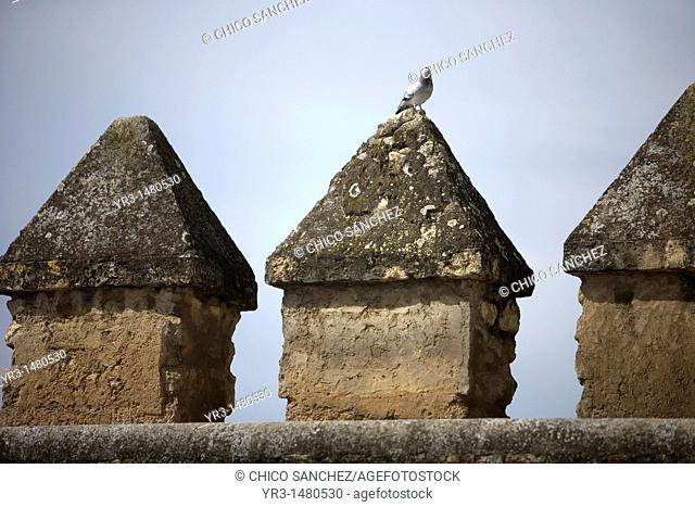 A pigeon perches in a merlon of the wall of the Christian Kings Alcazar of Cordoba, Andalusia, Spain, april 18, 2011