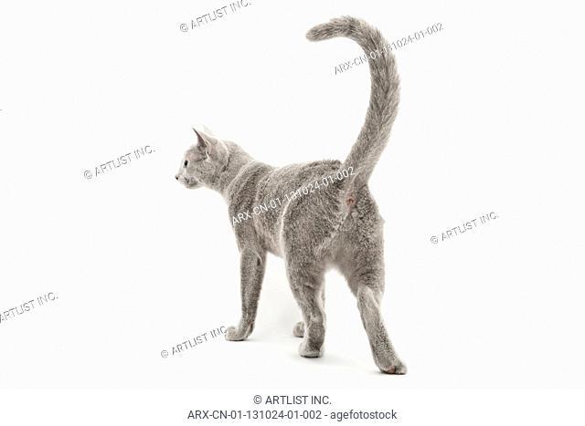 A cat walking away
