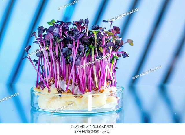 Plants in beaker against a blue background