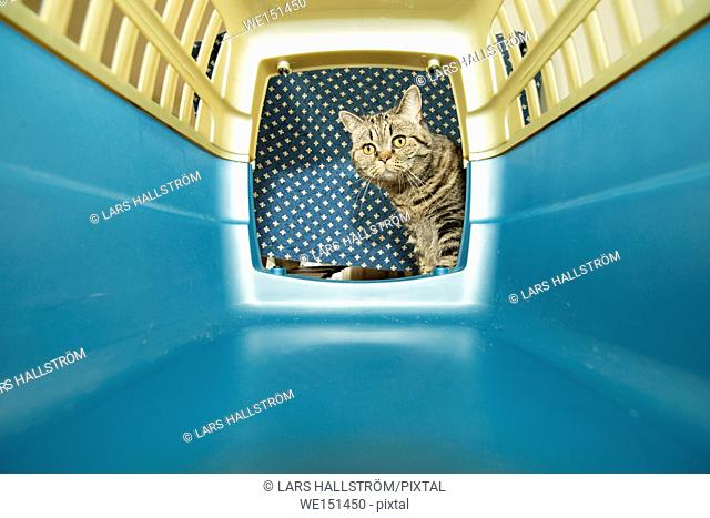 Cat with curious expression looking into an animal transporter box. Concept of pet transport and travel