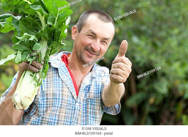 Hispanic man picking vegetables