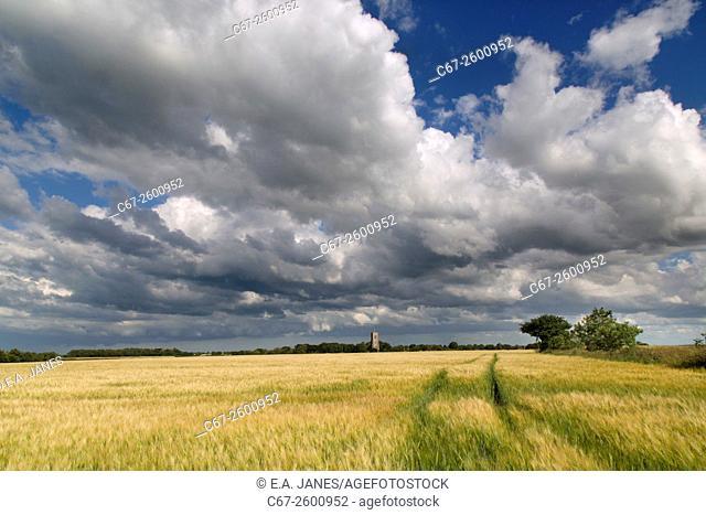 St James church Southrepps Norfolk and ripening barley field