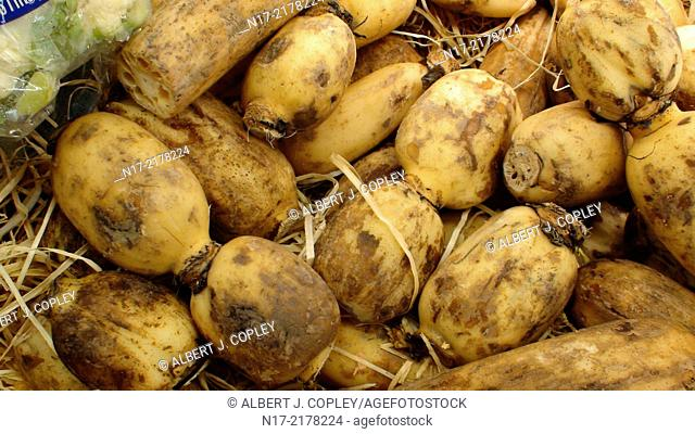 Lotus root: a common root of the market