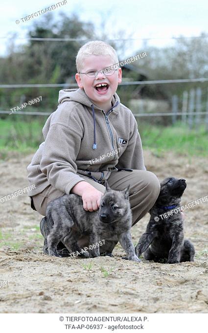 boy with Hollandse Herder Puppies